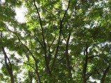 Potare gli alberi ornamentali è importante